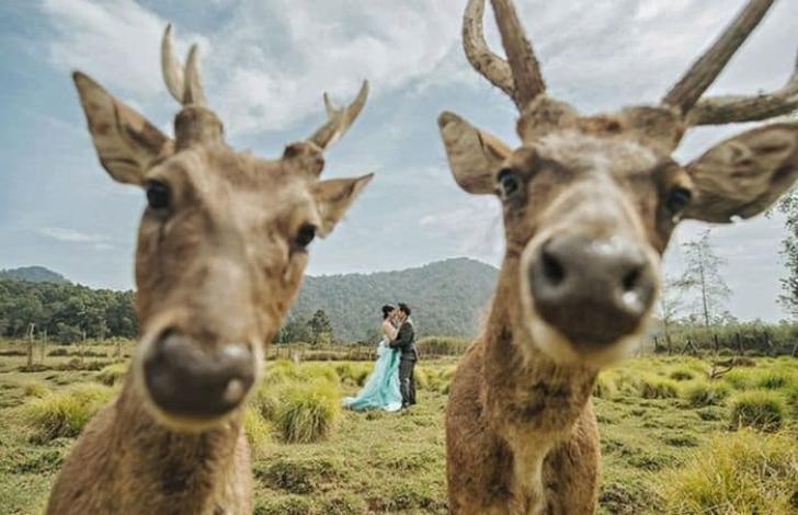35 фееричных свадебных фото, на которых что-то пошло не так