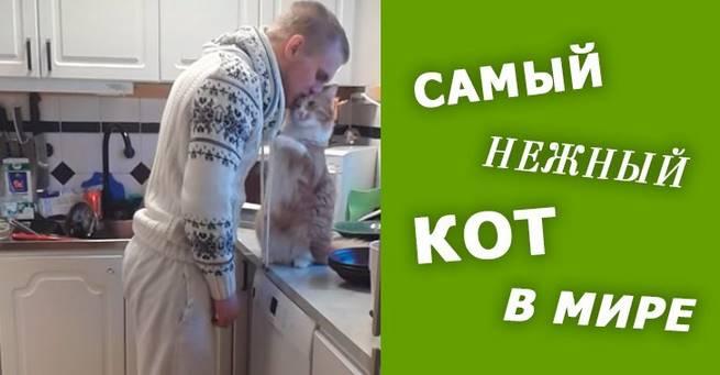 Самый нежный кот в мире