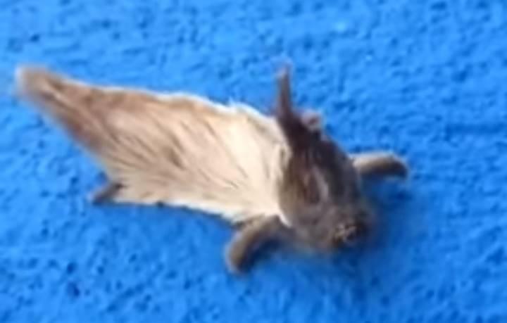Они нашли очень странное существо в своем саду… Только не вздумайте к нему прикасаться!