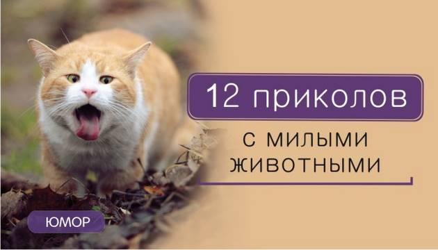 12 приколов с милыми животными