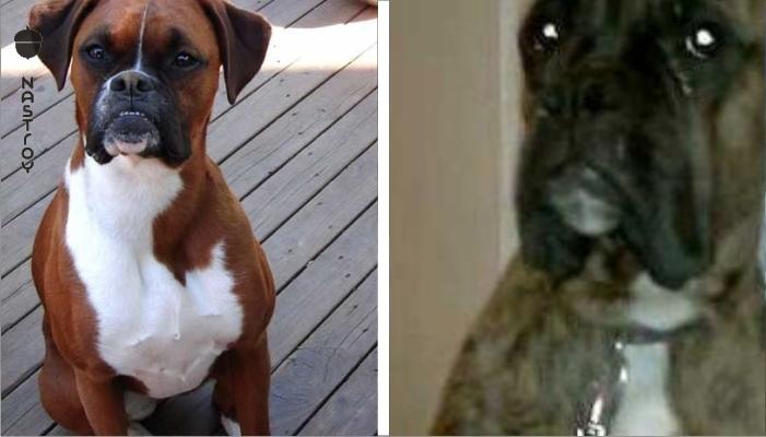 Пёс разгромил квартиру и хозяин его отчитывает. Реакция собаки — просто умора!