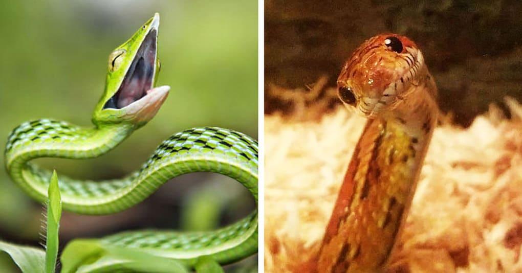 20 доказательств того, что змеи могут быть эмоциональнее, чем вы могли бы подумать