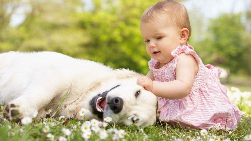 Девочка отобрала кость у овчарки. Посмотрите как отреагировал пёс, вы будете поражены!