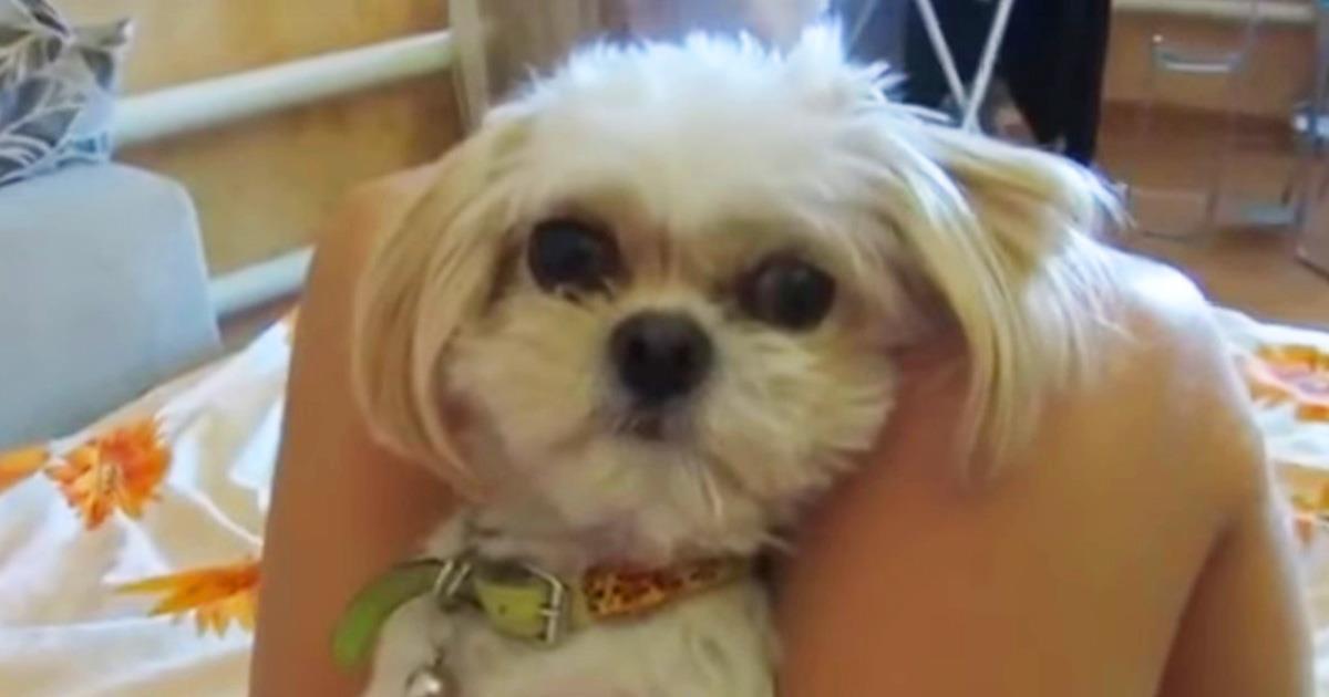 """Самые страшные слова для этой собачки: """"Боня, твою котлету съели…"""" Реакция песика просто фантастика!"""