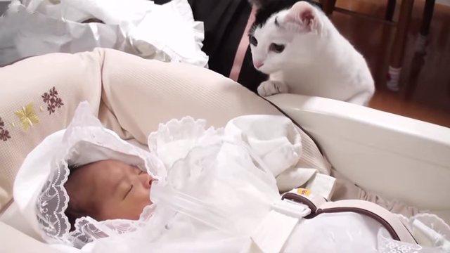 Первые знакомства младенцев и кошек. Посмотрите, как много любви в этом видео!