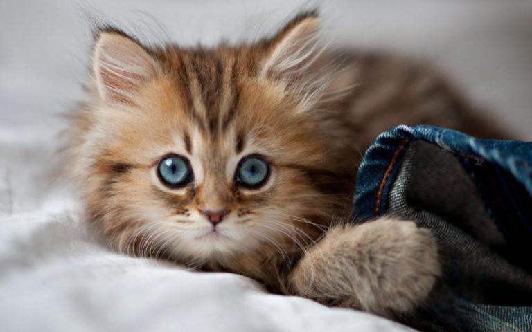 Самый маленький кот в мире!