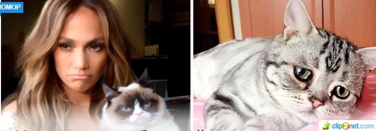 10 котов с необычной внешностью, которые покорили интернет