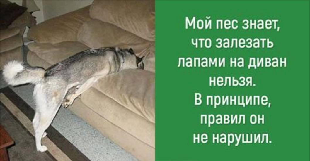 15 находчивых собак, которые хитроумным образом обошли запреты своих хозяев