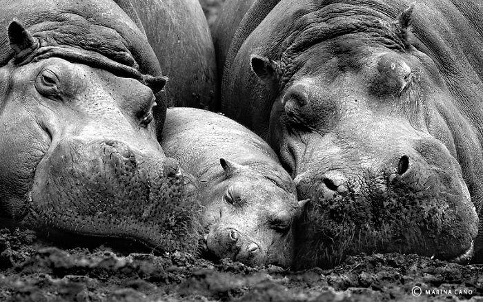 25 фото животных с детьми, которые растопят даже самое чёрствое сердце