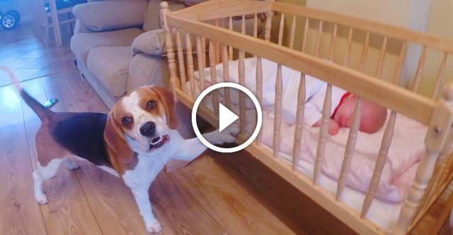 Когда в доме появился ребенок — собаку как подменили. А ведь его никто этому не учил!