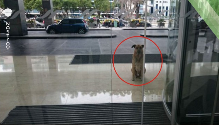 Уличный пес полгода встречал стюардессу у дверей отеля, и она это оценила