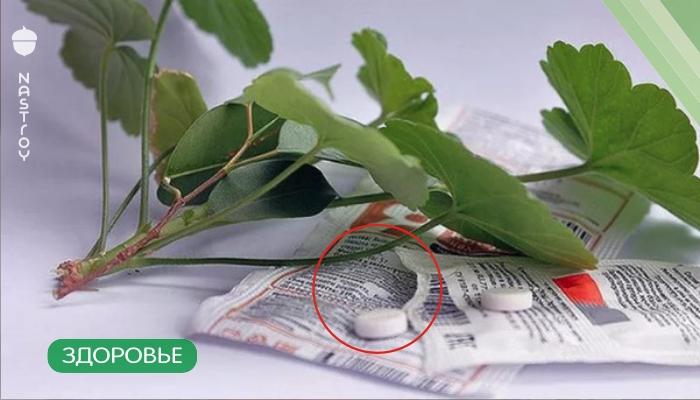 Разведите всего одну таблетку янтарной кислоты вечером и цветы будут радовать вас целый год