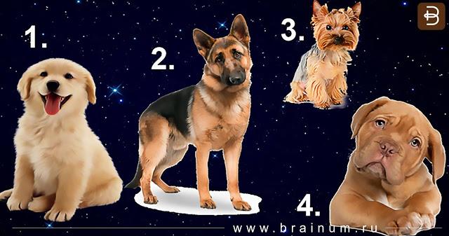 В год Желтой Собаки выбранный пес расскажет какой мужчина для вас идеален!