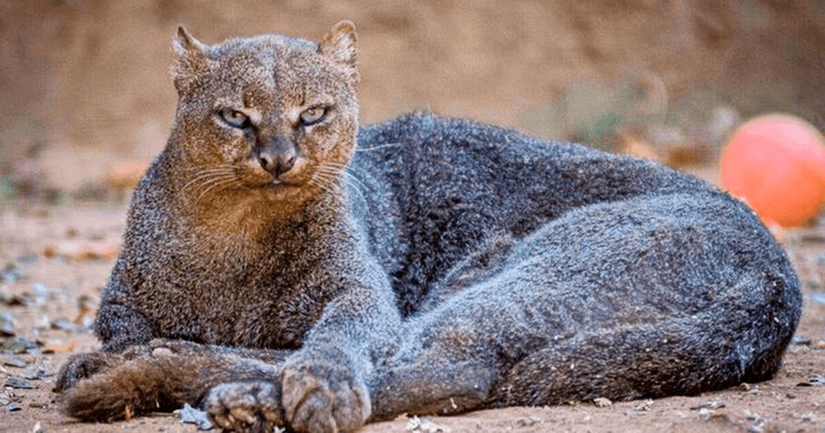 15 удивительных зверей, в существование которых сложно поверить!