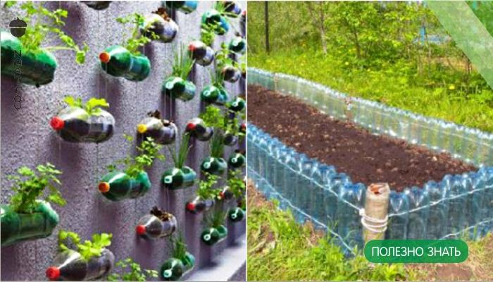 Всю зиму он собирал бутылки и свозил на дачу… Соседи смеялись, но весной участок было не узнать!