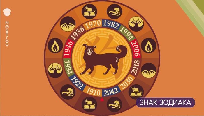 В чем 2018 год Желтой Собаки для Знаков Зодиака будет намного удачливее, чем 2017 год Красного Петуха!