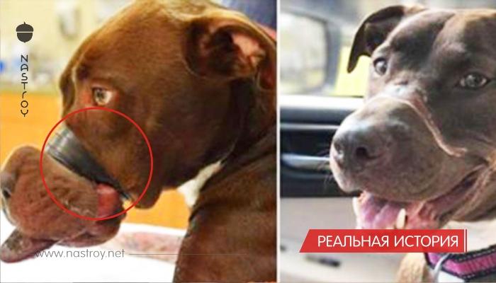 Хозяин замотал собаке пасть скотчем и бросил ее умирать... Теперь свершилось правосудие и живодер наказан!