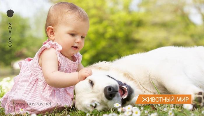 Собака — лучший друг маленького человека. Море позитива и океан удовольствия!