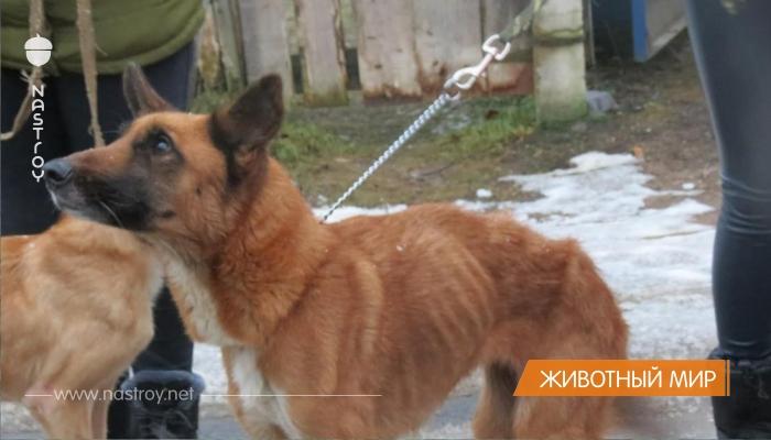 Жительница Ржева устроила в своей квартире настоящий Освенцим для собак