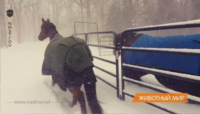 Хозяин выпустил лошадей погулять в снегопад, и их реакция рассмешила интернет