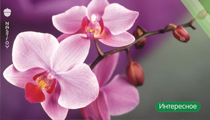 Магическое значение орхидеи в Вашем доме. Вы даже не представляете, что она может принести