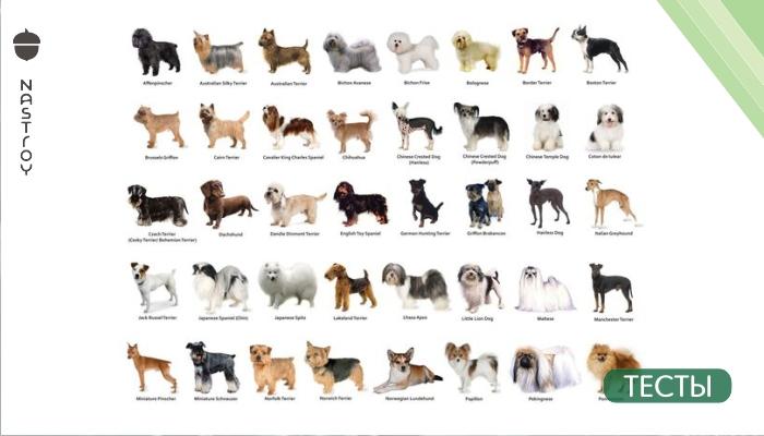 Тест. Какая порода собак вам подходит?