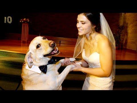 Самые странные шокирующие безумные свадьбы в мире ТОП 10 Брак с животными и заборами