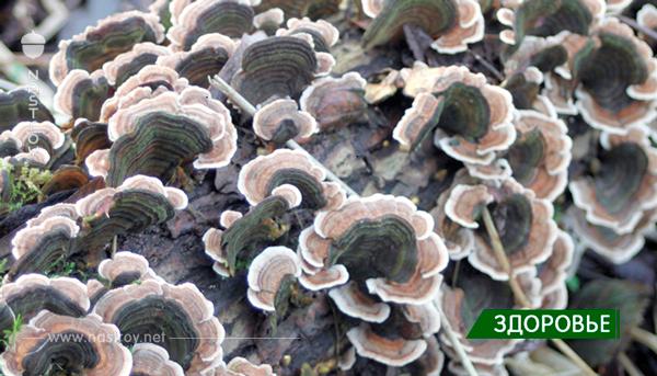 Если хотите, чтобы Ваш организм был свободен от грибов, не давайте им пищу!