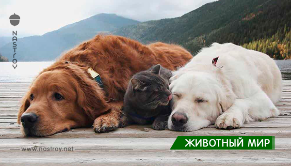 Эти две счастливые собаки долго жили вдвоем, но потом появился он! Уморительная семейка!