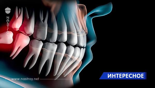 Создана технология выращивания новых зубов за 2 месяца!