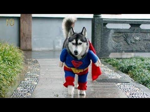 Героические поступки животных Интересные факты Звери спасатели Собаки Кошки Дельфины Львы Супергерои