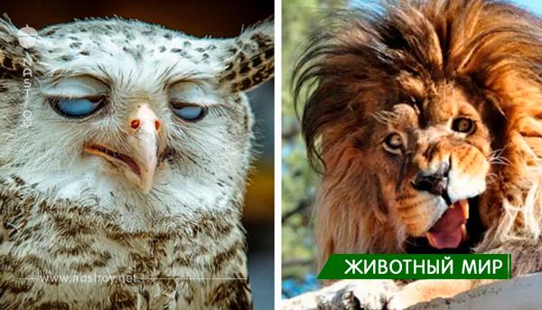 30 удивительно нефотогеничных животных, над которыми вы будете смеяться весь день