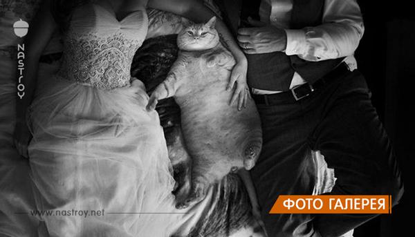 Самые яркие свадебные снимки, которые никогда не попадут в семейный альбом