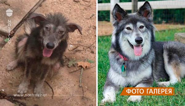 Собаки из приюта: снимки до и после обретения семьи