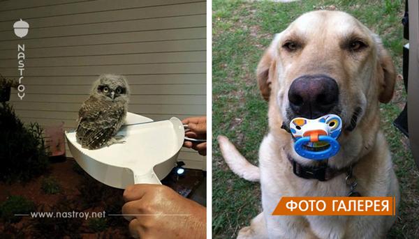 25 уморительных фотографий животных, которые сделали своим хозяевам самые неожиданные подарки