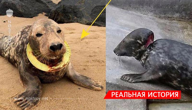 """""""Спасаем девочку, срочно!!!"""" По пляжу бродила тюлениха, на шее которой крепко сидела летающая тарелка…"""