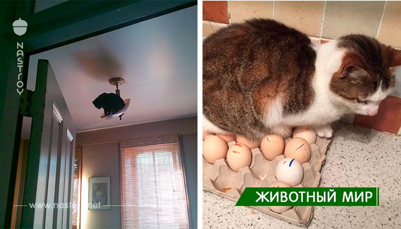 Веселые фотографии, кошек аферистов.