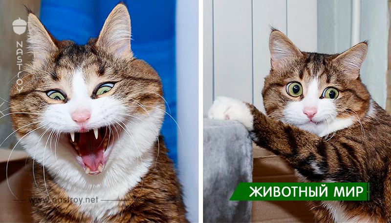 Несмотря на свои проблемы со здоровьем, эта кошка покорила Интернет своими смешными выражениями мордашки.
