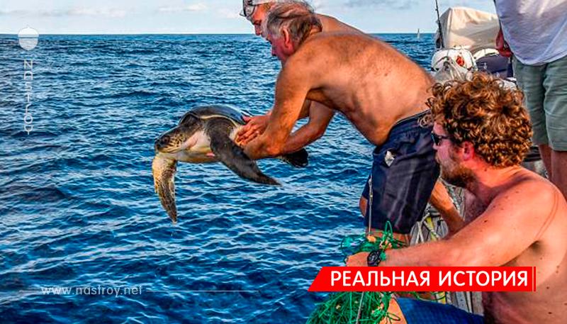 Британские моряки предпочли спасение черепахи победе в соревнованиях