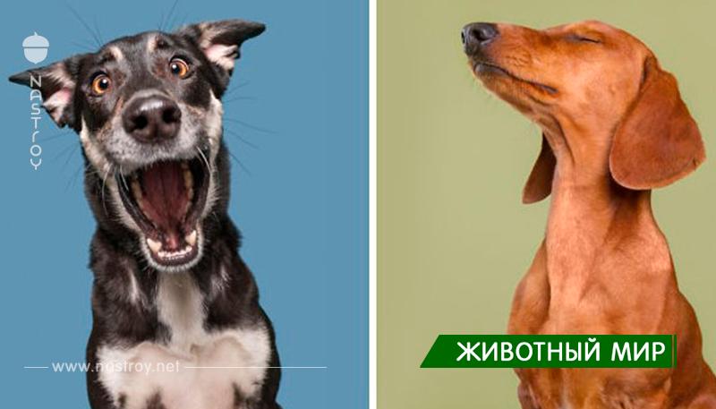 Невероятно забавные фото эмоций собак!