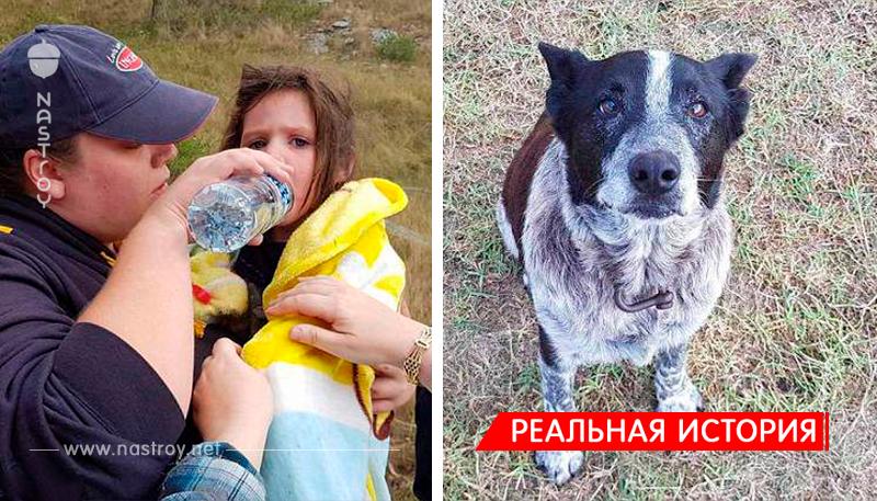 В Австралии 17 летняя полуслепая и глухая собака спасла потерявшуюся 3 летнюю девочку!