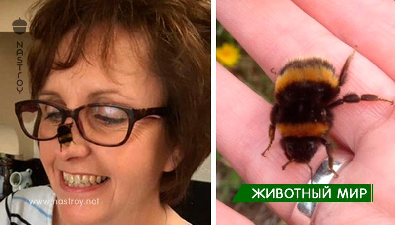 Женщина спасла бескрылого шмеля и их трогательная дружба покорила сердце интернета!