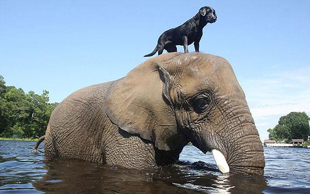 С другом веселее: 15 самых трогательных примеров дружбы в мире животных!