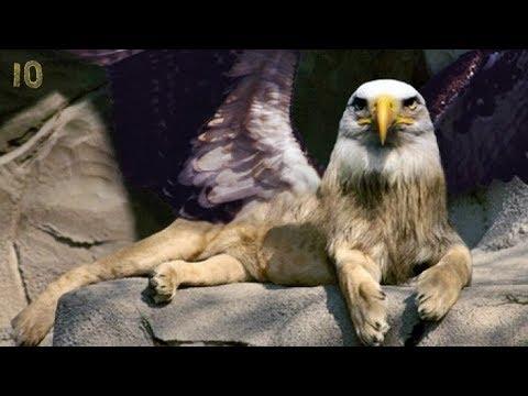Эти мифические животные реально существуют! ТОП 10 Единорог Кентавр Грифон Циклоп Дракон