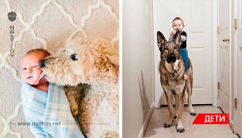 Маленькие дети и их большие собаки - 22 фото!