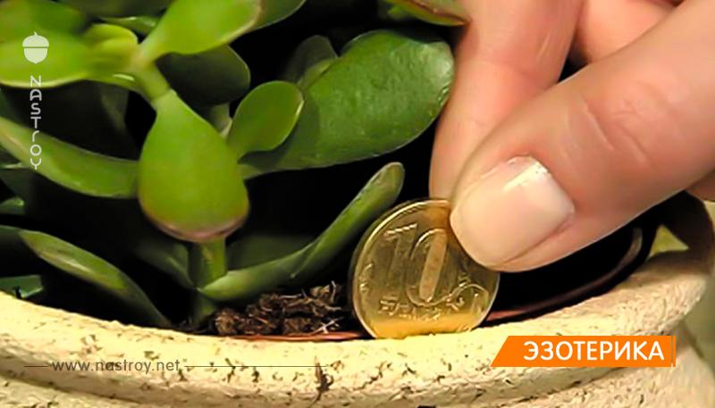 Если ты хочешь привлечь деньги в дом, этот трюк точно поможет! Удивительная сила…