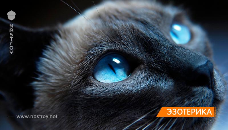 КОШКА – лучшая защита вашего ДОМА от нечисти и дурного глаза!