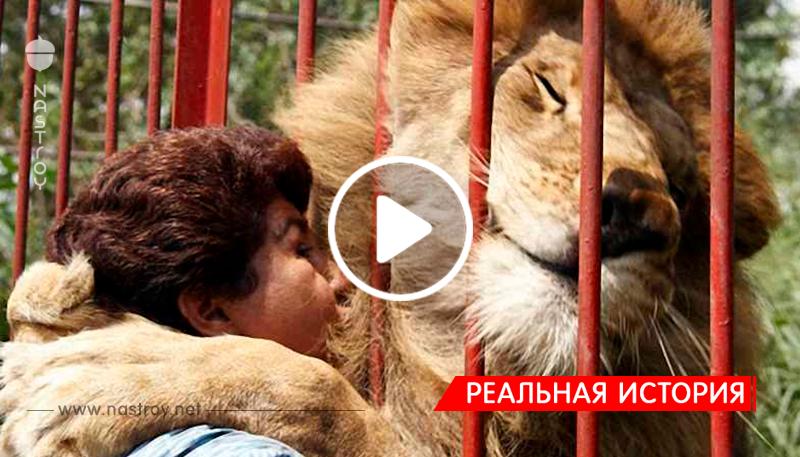 Спустя много лет лев не забыл женщину, которая спасла его и даже обнял ее!