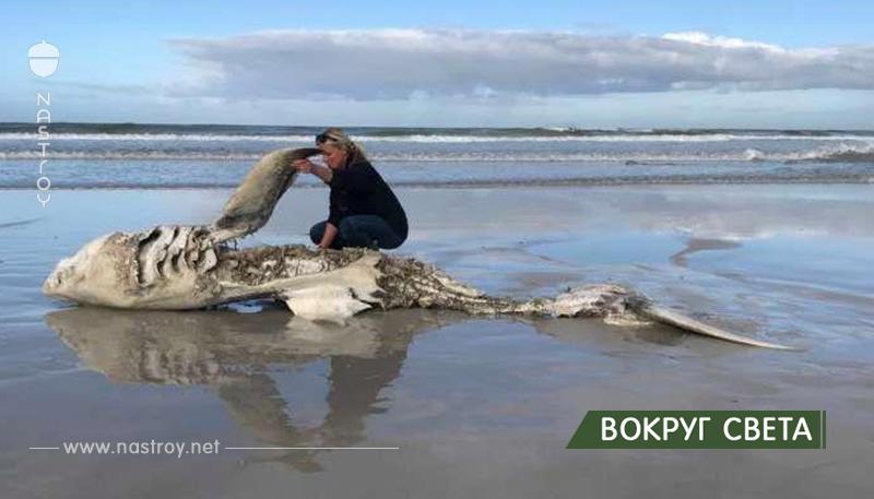 Учёные обнаружили уже четвёртый труп большой белой акулы, прибитый к берегу – причина смерти шокировала их!