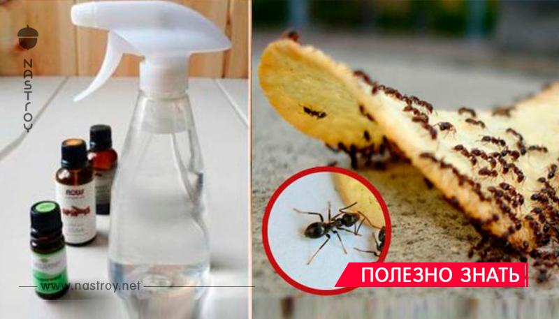 Как избавиться от муравьев, которые оккупировали ваш дом!